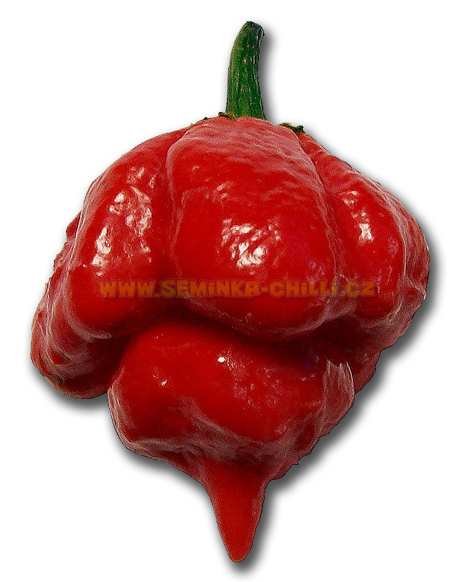 HPB22 chilli pepper world hottest