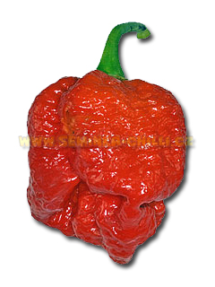 Trinidad Morouga Scorpion